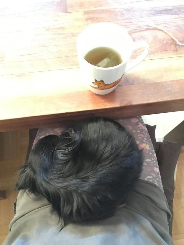 Kleiner Hund auf dem Schoß seiner Besitzerin.