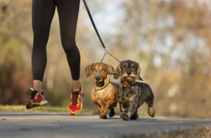 18 Reasons To Get Fit And Go For A Run With Your Dog