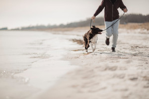 Man's Best Friend: 5 Benefits of Running with Your Dog