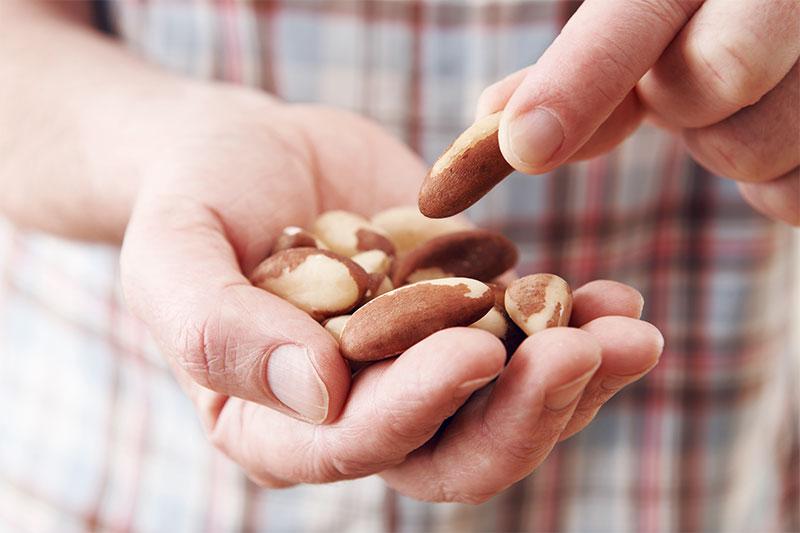 Eine Handvoll Nüsse