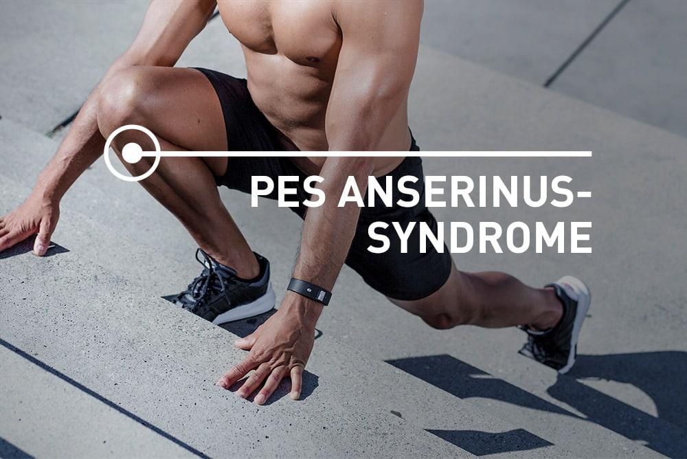 Pes Anserinus pain location