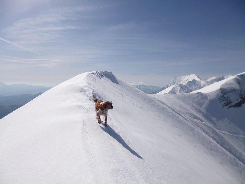 Hund auf einem schneebedeckten Gipfel.