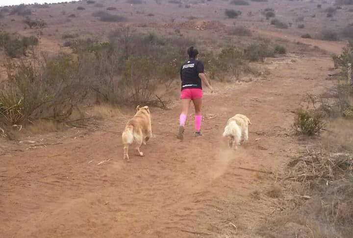 woman running with her two dogs in the outback.