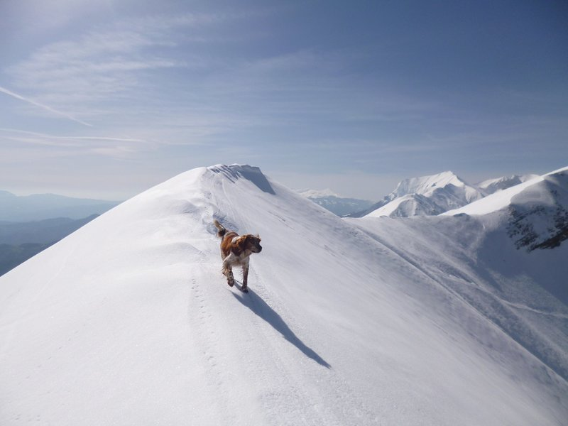 dog running in the snow on top of a mountain.