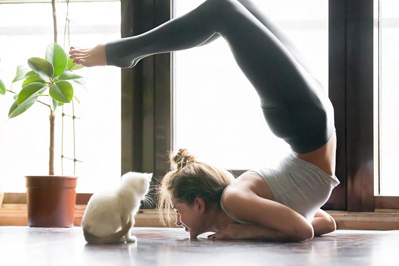Yoga avec un chat