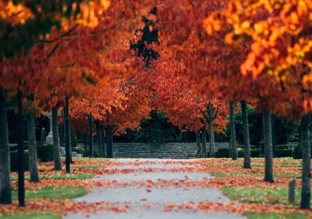 Corsa in autunno