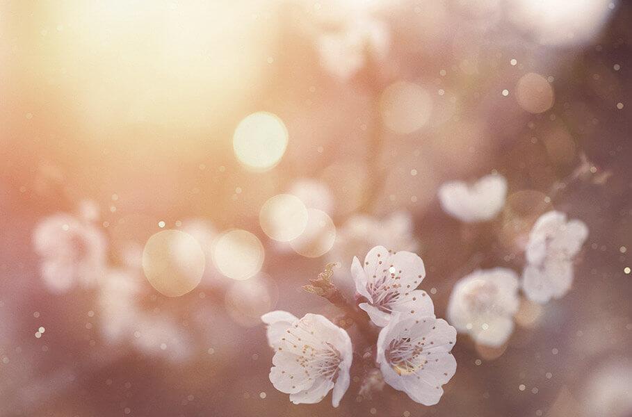 pollen and seasonal allergies